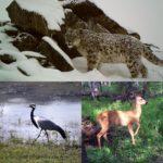 День дикой природы