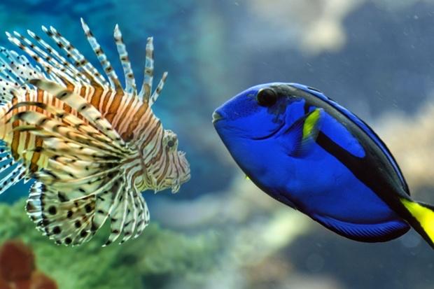 Выставка рыб и экзотических существ «Океания»