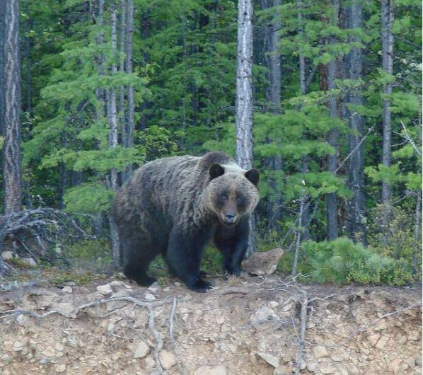 Медведи ББТ